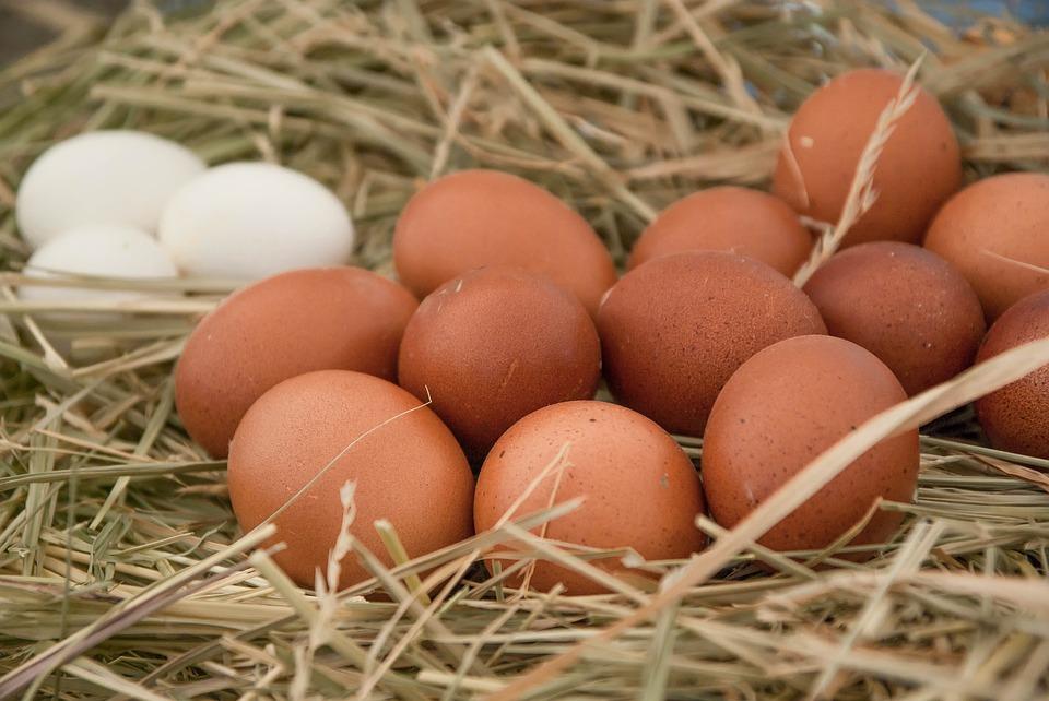 tipos-huevos-gallina
